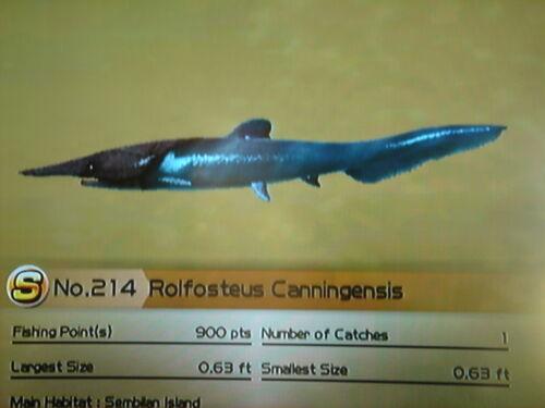 Rolfosteus Canningensis Wii Fishing Resort Wiki