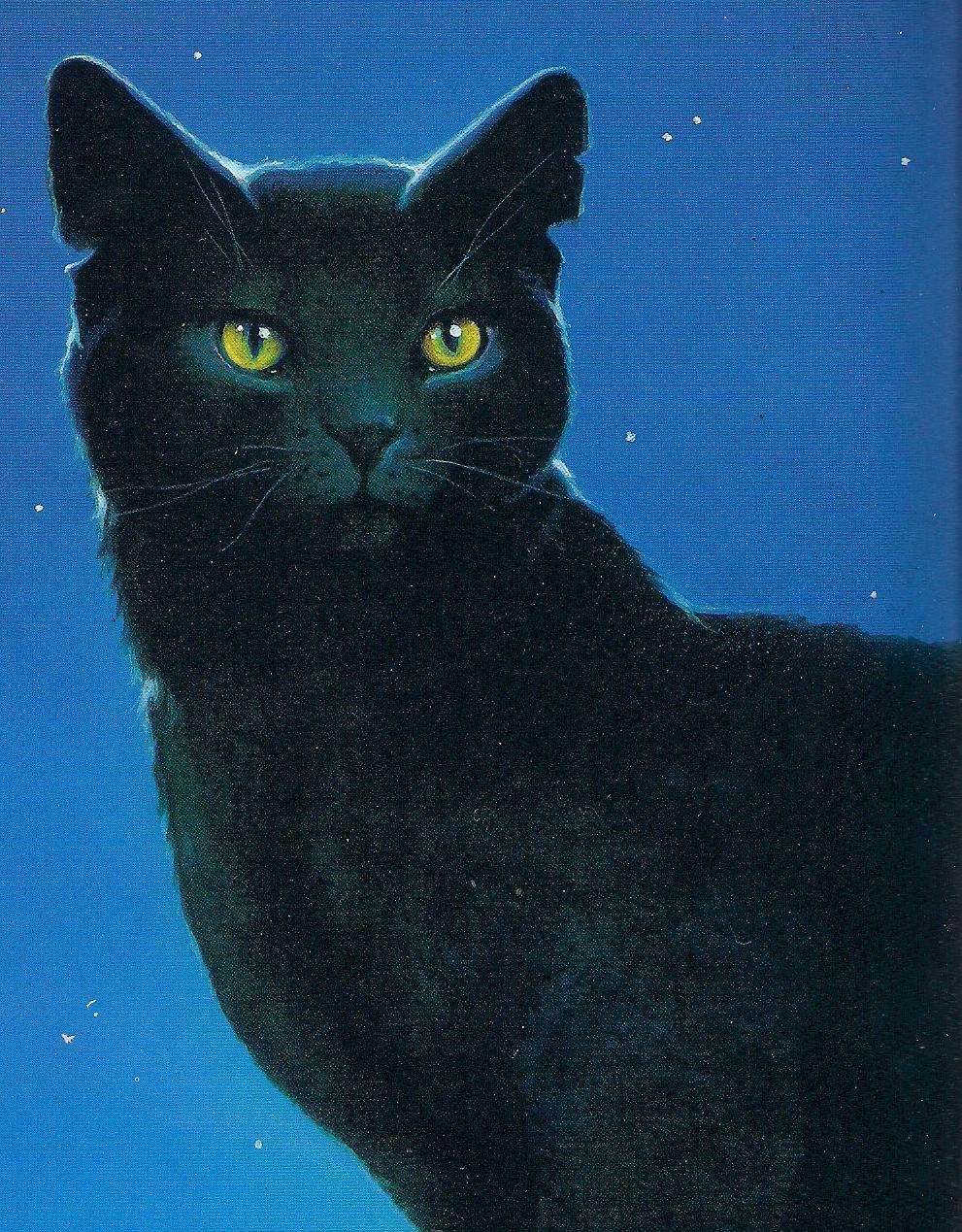 Nightpelt From Warrior Cats