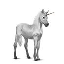 Dapple Gray Austrailian Pony.png