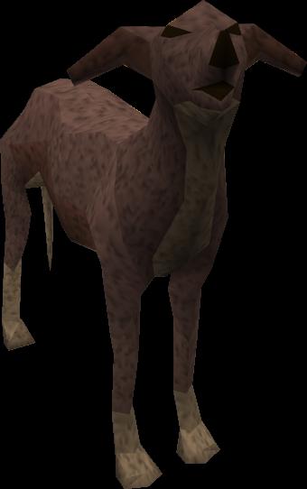 Image Greyhound Dark Brown Pet Png The Runescape Wiki
