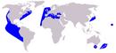 Delfin zwyczajny wystepowanie.PNG