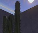 Cactus, Style 2