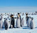 Antarctica/Gallery