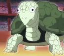 Turtle Spirit