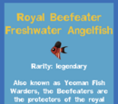 Royal Beefeater Freshwater Angelfish