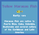 Yellow Maracas Fish