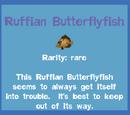 Ruffian Butterflyfish