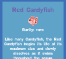 Red Candyfish