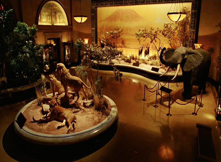 Columbus Museum Natural History