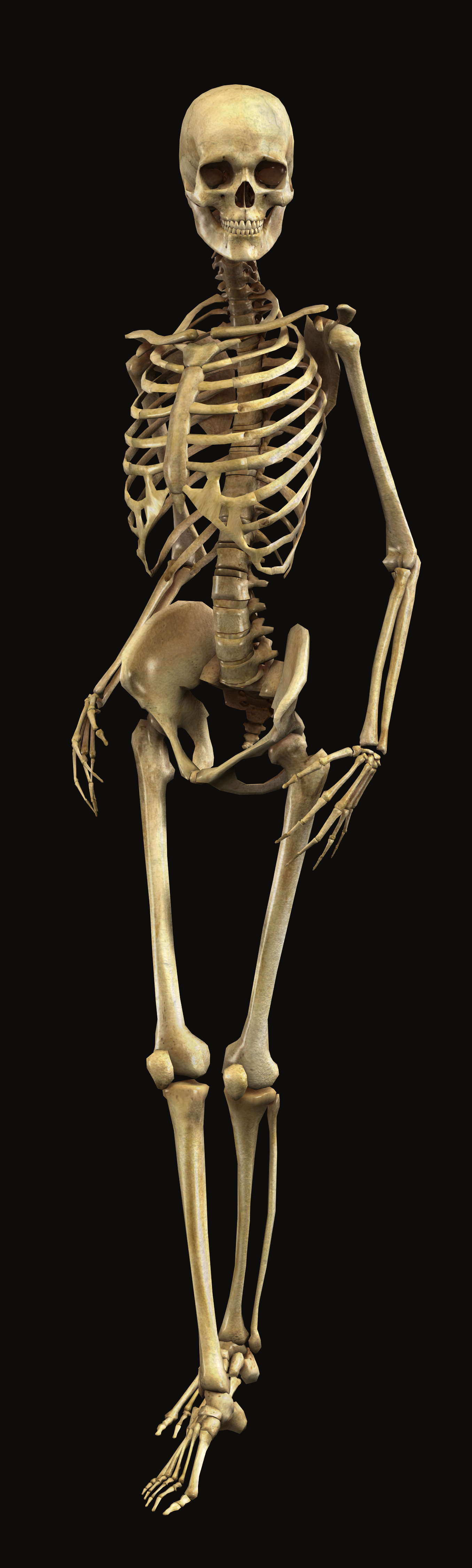 human skeleton Skeleton definition, the bones of a human or an animal considered as a whole, together forming the framework of the body see more.