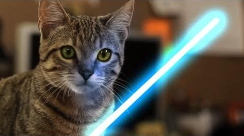 Jedi Kitten with the Force