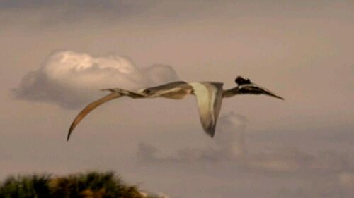 Quetzalcoatlus - When ...