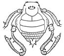Glysterus calcartibialis