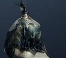 Crushed Spider Egg