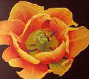 Golden Bell: Open Flowers (1)