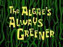 The Algae's Always Greener.jpg