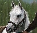 Queensguard's Horse