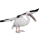 Pelicans, Herons & Spoonbills
