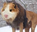 Hamster-Lion