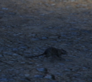 Rats (animal)