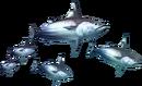 3rdGen-Fish Render 008.png