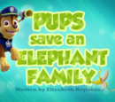 Pups Save an Elephant Family
