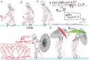 Amane Nishiki (Concept Artwork, 57).png