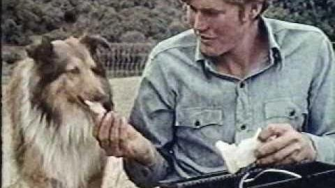 The Little Shepherd Dog of Catalina
