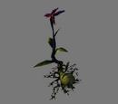 Lilia duchów