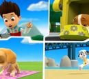 Skye/Gallery/Pups Save a Hoot