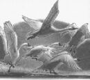 Messenger Swans