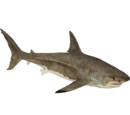 Great White Shark (Zerosvalmont)