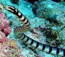 Dinosaur train subermian sandy sea snake