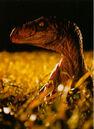 Velociraptor Grasfeld.jpg