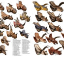 Ornithischia