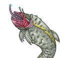 Carnivorous fish