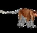 Proboscis Monkey (Jannick)