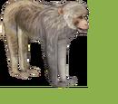 Rhesus Macaque (Dutch Designs)