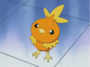 Nurse Joy Torchic.png