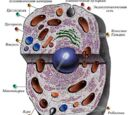 Органеллы клетки