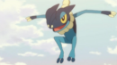 Ash Frogadier.png