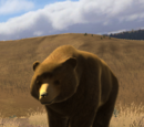 Grizzly bear (2.7)