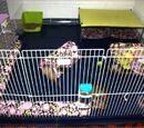 Ideas para distribución interior de jaulas, play pen o habitaciones