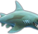 Reef Shark (Evolution)