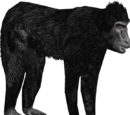 Sulawesi Crested Macaque (DutchDesigns)