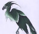 Augurey (phénix irlandais)