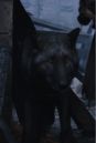 Shaggydog.png