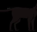 Cat Genetics