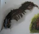 Megapede dereponecis