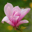 Квітка.png